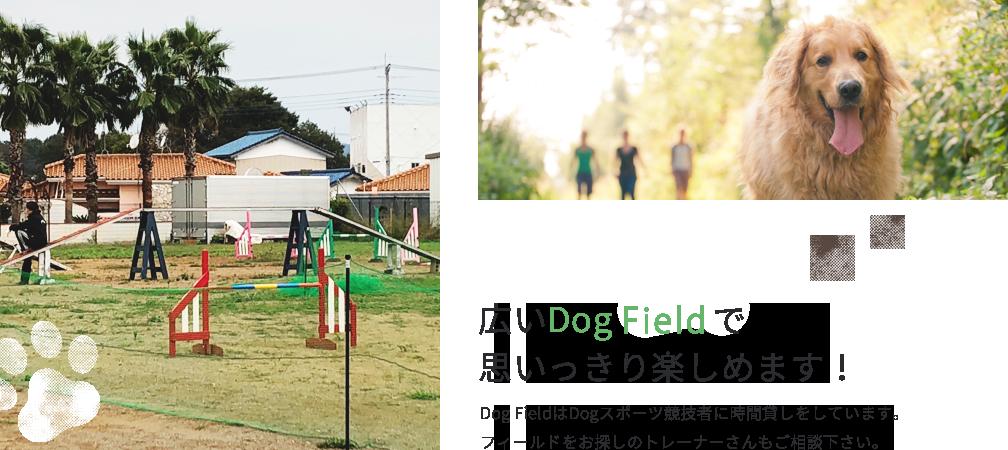 広いDog Runで思いっきり楽しめます!